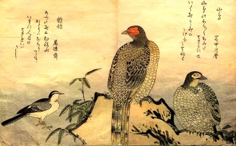 Птицы. Изображение птиц. Гравюры и ...: www.bibliotekar.ru/japan-utamaro/17.htm