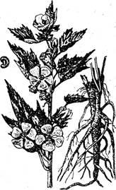 Сведения о лекарственных растениях